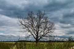 Nur ein Baum - Just a Tree (Jutta M. Jenning) Tags: baum baeume strauch straeucher wege spazierweg spazierwege wiese landschaft natur fruehling fruehlingserwachen erholen erholung stressabbau wanderweg wandern spazieren laufen naturerwachen wiesen