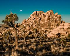 Joshua Tree National Park (Jose Matutina) Tags: california desert joshuatree sel85f14gm sonya7ii trip