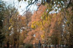 IMGP1146_Portra 160 VC DxO_sign (Puljak) Tags: helios58mmf2 swirlybokeh swirl pentax pentaxk1 park trees autumn autumncolours autumncolors autumnleaves autumntrees fallcolors fallleaves fall portra kodakportra160vc dxo dxofilmpack outdoor