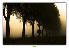 SERQUES (régisa) Tags: impassedumarais arbre tree alignement alignment brume mist serques d300 platinumheartaward