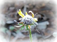 frosty explore (Sonja Parfitt) Tags:
