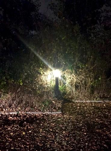 Light in the dark 311/366 (2)