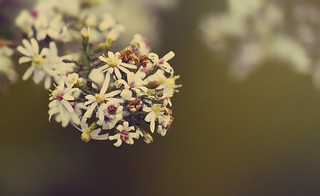 Scent of ancient times