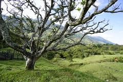 _DSC9740 (nonesmanneslond) Tags: finca barbosa colombia antioquia medellin farm farmlife
