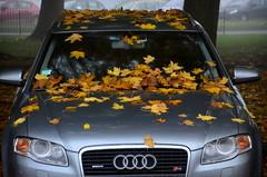 Attestation d'assurance (Jean-Luc Léopoldi) Tags: voiture car autumn fall deadleaves feuillesmortes capot