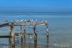 Dzilam de Bravo 8126 ch (Emilio Segura Lpez) Tags: dzilamdebravo gaviota muelle playa mar azul yucatn mxico