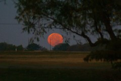 DSC00476 (carrie_20001jf) Tags: supermoon moon morning night astronomy texas sky texassky supermoon2016 2016 skyporn nature texasnature