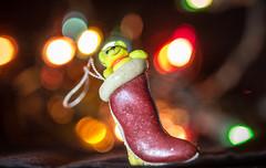 Teddy in a Stocking (SKAC32) Tags: macro christmastreelights canon100mmf28macro holidaybokeh macromondays stocking teddybear