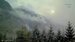 IN GIRO PER L'EUROPA.  in explore ! (Salvatore Lo Faro) Tags: alpi neve monti alberi svizzera autunno nebbia sole foschia verde grigioni cantone salvatore lofaro canon g16