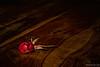 Memories of a Rose (Maurizio Scotsman De Vita) Tags: natura tavolo fiori nature plantsflowers italia naturamorta roses vegetables gocce drops vegetali table rose colourful stilllife vegetazione flowers colorato droplets goccioline livecolours tables tavoli