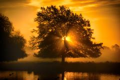 Morning Glory (paulinuk99999 - tripods are for wimps :)) Tags: pauliuk99999 sunrise tree water mist fog bushy park heron lake sal70400g