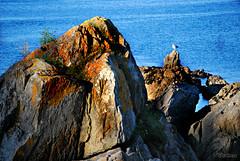 Farallóns (Franco D´Albao) Tags: francodalbao dalbao nikond60 rocas rocks gaviota seagull farallóns alcabre vigo mar sea piedra granite stones líquen lichen