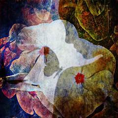 Hello my lovely (lindyginn) Tags: surreal fly butterfly flower shadow silhouette vinca light dark garden ipad ipainting mobile art ethereal girl ginn outdoor
