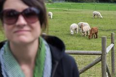 IMG_4535.jpg (funkgasm) Tags: animals hollygifford llama orcasisland people sanjuanislands woman eastsound washington unitedstates