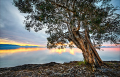 Wallis LakeSunset (Young Ko) Tags: nature yellow nikon flickr landscape amazing atmosphere texture sky lonely composition reflection interesting nsw cloudy overcast whitewater clouds light sunset trees tiona greatlake bootibooti