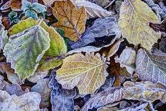 Peace in the valley (pauldunn52) Tags: alun valley wales leaves frost woodland floor colour ice