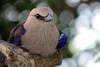 Sitting pretty (Hedi-Alana) Tags: beauty beautiful bird birds bokeh nature natures zoo houstonzoo houston