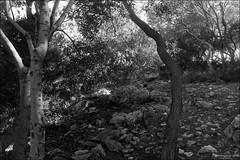 where is the cat? (Film photography) (georgios a.v.) Tags: monochrome blackandwhite minoltasrt101 mcwrokkorsi28mm125 orwoun54 r09rodinal slr mflenses ilfordrapidfixer filmphotography nopp nopostprocessing