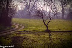 sogno (conteluigi66) Tags: prato ombra ombre illuminazione luce albero vegetazione