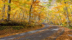 Golden Road  (Sharleen Chao) Tags: nationalpark japan aomori autumn maples cpl canon 5dmarkiii 1635mm           sunny day travel road