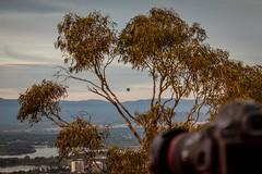 Mt Ainslie Sunrise Canberra-23 (Quick Shot Photos) Tags: act australia canberra canon canoncollective visitcanberra australiancapitalterritory au