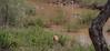 The impala (Aepyceros melampus). (annick vanderschelden) Tags: africa southafrica southernafrica wilderness nature trees nationalpark adventure safari animal birds visitor species naturalworld livingorganism biodiversity wildlifereserve nationalwildlifereserve explore vegetation tourist eco naturereserve conservationarea habitat animalwildlife wildernessarea beautyinnature backtonature naturalist picturesque lowveld tranquility animalsandplants impala antelope aepycerosmelampus browser grazer