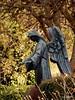 DSCN0813 (derudo) Tags: südschwarzwald stohren münstertal vogesenblick blickindierheinebene