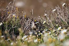 Taste of Spring (you_zi) Tags: california usa canon sandiego 5dmk2 canoneos5dmk2 canonef70300mmf456lisusm