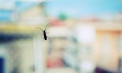 The bug (PattyK.) Tags: window bug photography spring nikon europa europe may hellas balkans europeanunion myphotos ilovephotography 2014 ellada ioannina giannina giannena epirus amateurphotographer ipiros        nikond3100