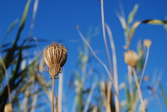 nature's crown (stevefge) Tags: nature turkey