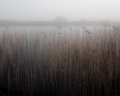 Needles (jellyfire) Tags: winter england mist abstract nature fog canon reflections reeds landscape grey dawn suffolk unitedkingdom norfolk peaceful highkey unusual ponds emotive atmospheric eastanglia wortham 1740mmf4lusm redgraveandlophamfen canon5dmkii