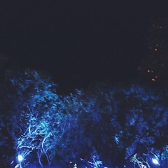 Blue Trees (Mashael88) Tags: life blue trees love mesh south saudi arabia sa ahmed abha            mashael