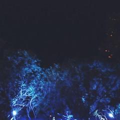 Blue Trees (Mashael88) Tags: life blue trees love mesh south saudi arabia sa ahmed abha            mashael