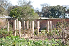 Arena of Plants with rose arbour in centre (Holkham Estate) Tags: park door flowers wedding plants house heritage history nature rose fruit rural project garden gardeners coast countryside bed italian estate britain gates walk space wildlife country volunteers norfolk victorian meadow olive warmth vegetable historic deer arena exotic greenhouse planning change restoration organic ironwork renovation visitors functions ornamental glasshouse development planting bedding arbour trees relax statelyhome weathervane british holkhamhall grapevines mansion arenaofplants samuelwyatt northnorfolk walledgardens arenaofplants plantfair
