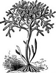 Anglų lietuvių žodynas. Žodis carragheen reiškia <li>Carragheen</li> lietuviškai.