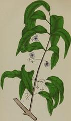 Anglų lietuvių žodynas. Žodis spindle-tree family reiškia velenas-medžio šeimos lietuviškai.