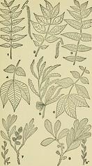 Anglų lietuvių žodynas. Žodis carya laciniosa reiškia <li>Carya laciniosa</li> lietuviškai.