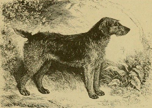 "Image from page 26 of ""The Airedale terrier standard simplified"" (1921)"