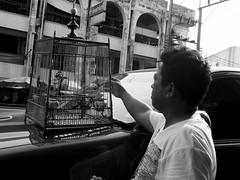 street people blackandwhite bw pet bird john thailand blackwhite asia streetphotography streetlife olympus caring omd hatyai monocrome em5 giftoflove ragai travelstreet streetmoment hatyaistreet momentcatcher petfeeding giftofcaring johnragai omdem5 johnariragai johnragaiphotos