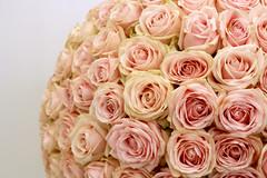 Roses (Melissa Vollans) Tags: pink roses flower rose ball dying wilting flowershow flowerarrangement tattonpark