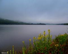 Foggy day (Yolanta Z) Tags: stagathe