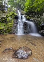 Dark Hollow Falls (Avisek Choudhury) Tags: virginia waterfall shenandoah gitzo shenandoahnationalpark canon1635mmf28lii canon5dmarkii avisekchoudhury acratechballhead httpwwwaviseknet avisekchoudhuryphotography