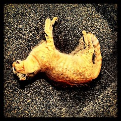 Dead cat on the pavement in 110 degree heat. Welcome to the Salton Sea. (vonhemp) Tags: art abandoned square graffiti decay squareformat hefe decadence counterculture saltonsea iphoneography instagramapp uploaded:by=instagram