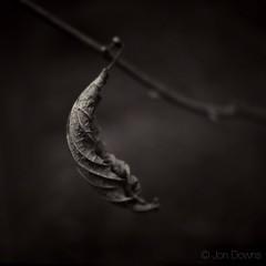 longing (Jon Downs) Tags: jondowns