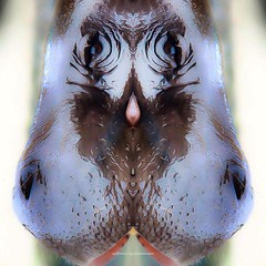 h i p p o r n (epiclectic) Tags: reflection animal photoshop mirror design graphic wildlife humor perspective manipulation images symmetry reflect symmetrical mutant twisted enhancement epiclecticcom epiflection epiflectionbyepiclecticcom