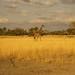 African safari, Aug 2014 - 017