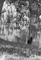 BW 1 (Ennio66) Tags: blackandwhite bw dog white lake black cane lago bianco biancoenero bwemotions