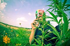 nARCOTO AIME LA NATURE (nARCOTO) Tags: herbe hemp