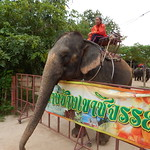 Elephants at the Wat Khao Chan riding centre thumbnail
