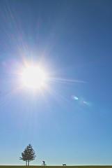 Looking for Spring in Sydney (Paul D'Ambra - Australia) Tags: ocean new city trip travel sky sun love water wales landscape happy coast surf weekend south sydney australia surfing nsw newsouthwales tbt ilovesydney ttot seeaustralia visitnsw